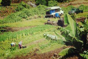 agriculteurs-reunionnais