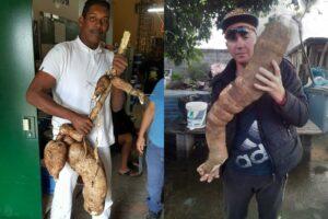 manioc-aux-formes-humaines