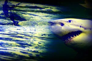 attaque-requin-kite-surf