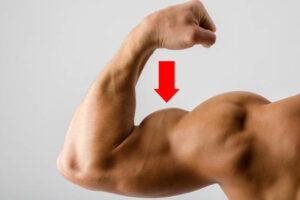 bras-muscle