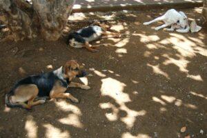 chiens-errants