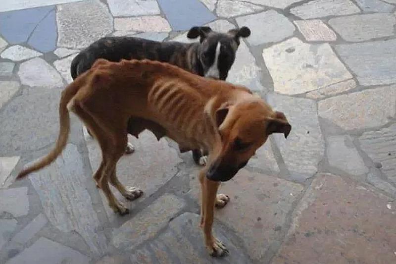 chien maigre locomotion