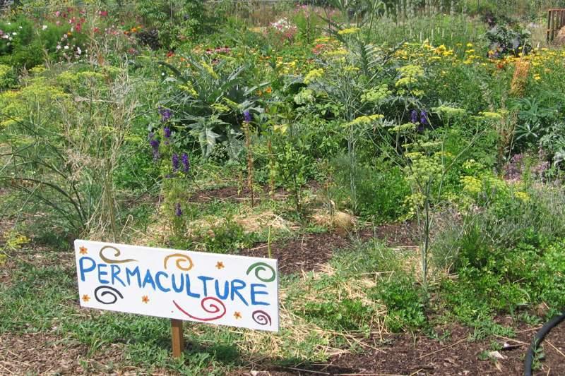 D couvrez la permaculture la r union travers un - La permaculture c est quoi ...